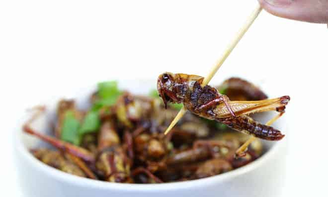 Insects As Food And Medicines